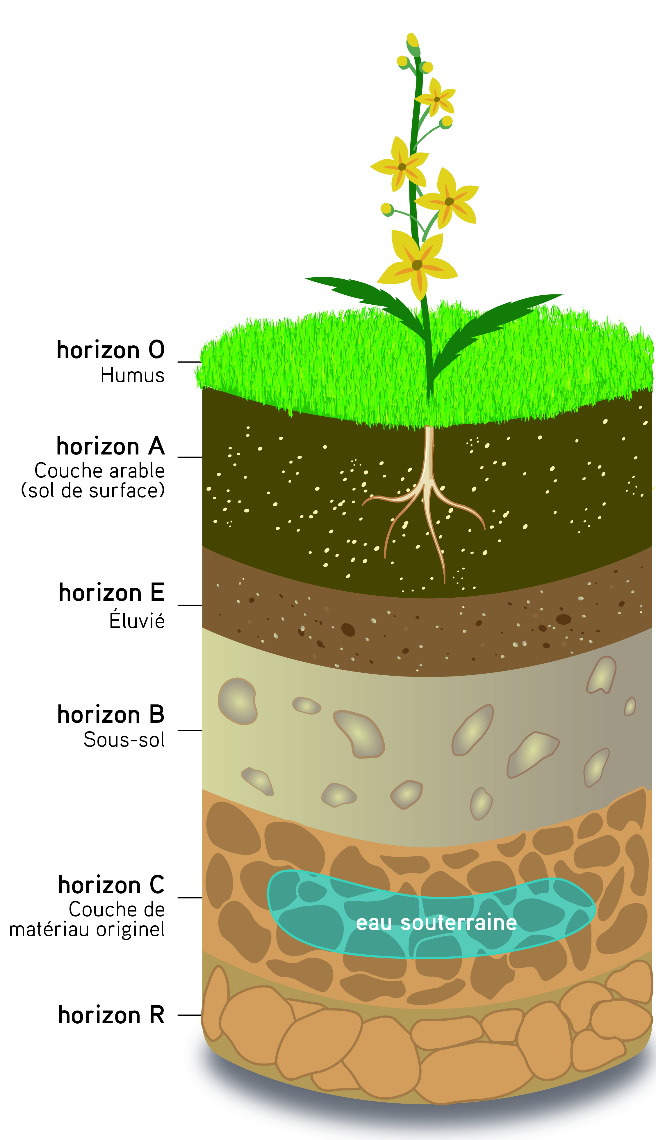 Les sols, épiderme fragile aux multiples fonctions et services écosystémiques